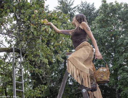 Apple picking on ye old homestead, Salt Spring Island, BC